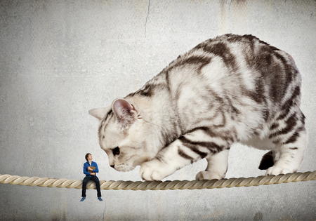 Cat on rope. Mixed media