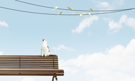 Birds sitting on rope and cat hunting them