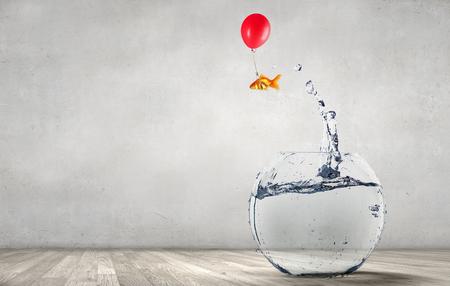 Goldfish jumping from aquarium Standard-Bild