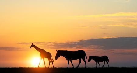 Safari sunset landscape