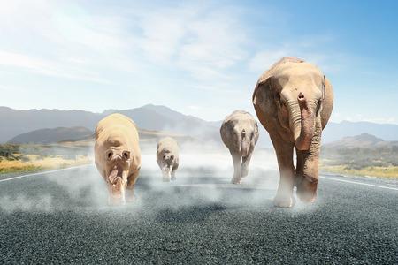 Elephant walking on the road. Mixed media