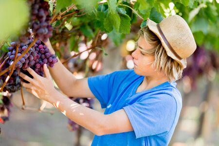 Boy in vineyard