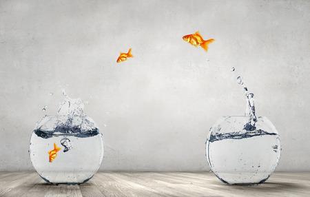 澄んだ水と金魚鉢から飛び出し金魚 写真素材