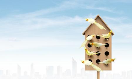 Nesting box and many parrots in it Reklamní fotografie