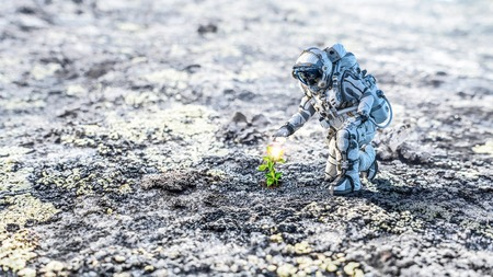 Astronaut on planet surface and green growing sprout. Mixed media Banco de Imagens
