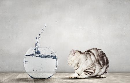 Kat die voor gouden vissen jaagt die van aquarium springen