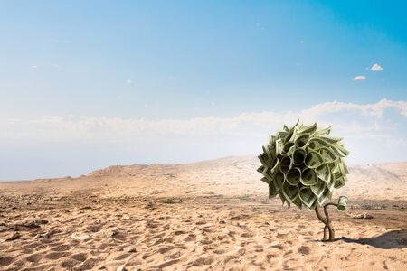 Concept of new life with tree growing in desert. Mixed media