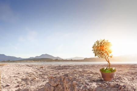 Money tree with banknotes in pot among desert Stock Photo