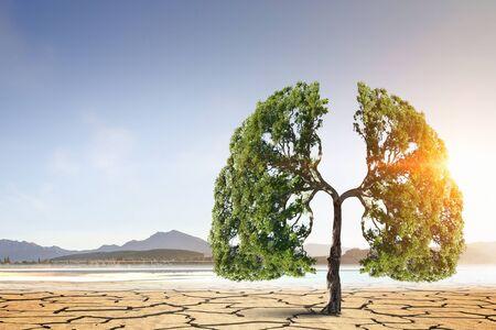 砂漠で木が育つ新しい生活のコンセプト。混合メディア