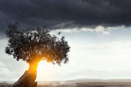 Green tree as symbol for healthy ecology. Mixed media Stock Photo