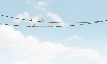 Many parrots sitting on rope high in blue sky