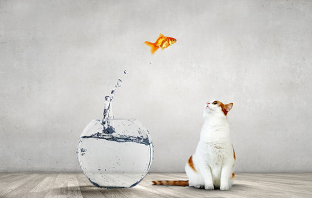 Cat hunting for gold fish jumping from aquarium Stockfoto