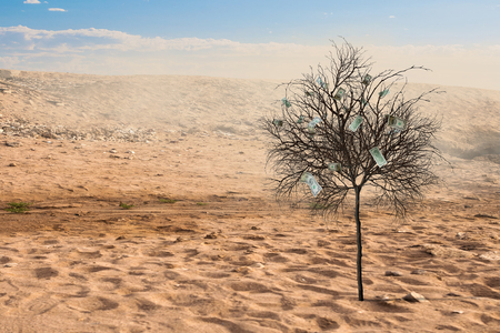 Lonely green tree in the desert