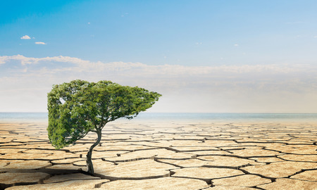 Lonely green tree in the desert. Mixed media Stock Photo