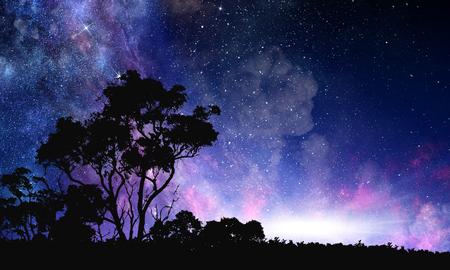 Scène de forêt de nuit Banque d'images - 100321732