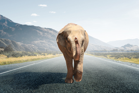 Elephant walking on the road. Mixed media