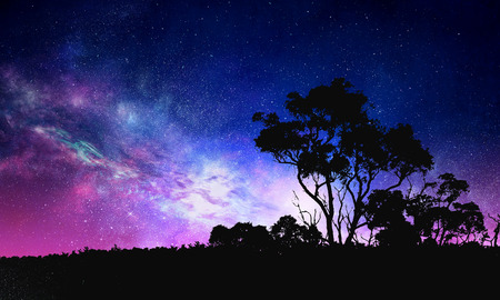 Background picturesque image of night forest and starry sky Reklamní fotografie
