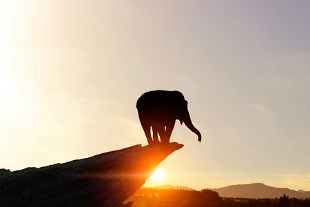 Silhouettes of elephant animal at sunset on horizon