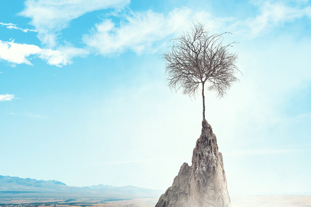Landscape with dry tree growing from rock top