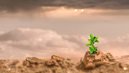 Young green seedling growing in desert sand