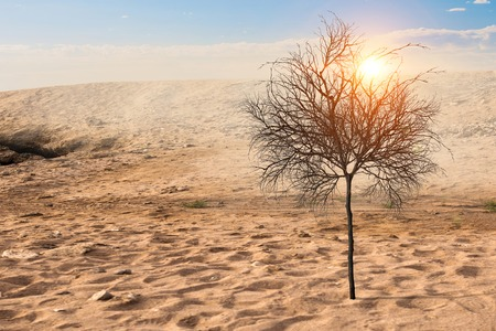 Lonely green tree in the desert. Mixed media 写真素材