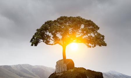 Lonely tree on rock top. Mixed media Archivio Fotografico - 111197683