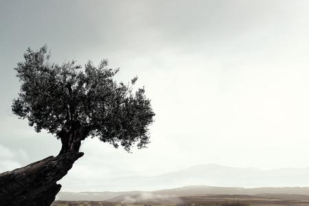 Lonely tree on rock top. Mixed media Archivio Fotografico - 111508605