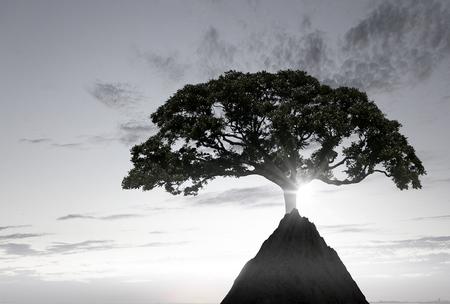 Lonely tree on rock top. Mixed media Archivio Fotografico - 111508810