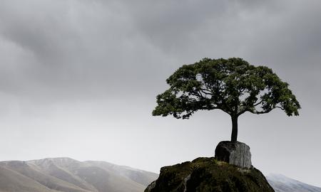 Lonely tree on rock top. Mixed media Archivio Fotografico - 111864558