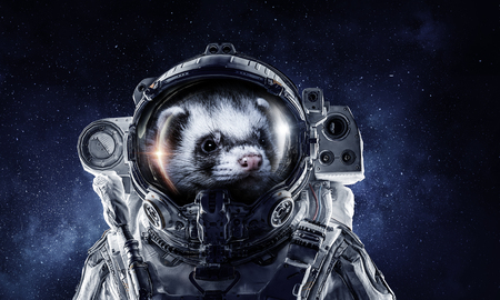 Astronaut ferret wearing space suit against starry sky. Mixed media