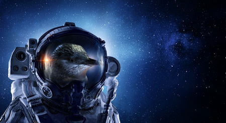 Astronaut bird wearing space suit against starry sky. Mixed media