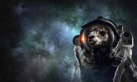 Astronaut camel wearing space suit against starry sky. Mixed media 写真素材
