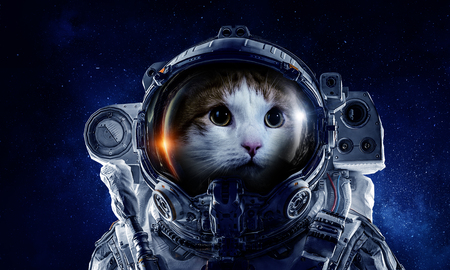 Astronaut cat wearing space suit against starry sky. Mixed media
