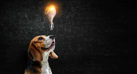 Cute beagle dog and glowing light bulb. Mixed media