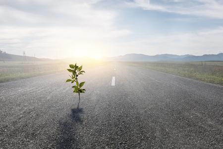 Seeding plant on asphalt road