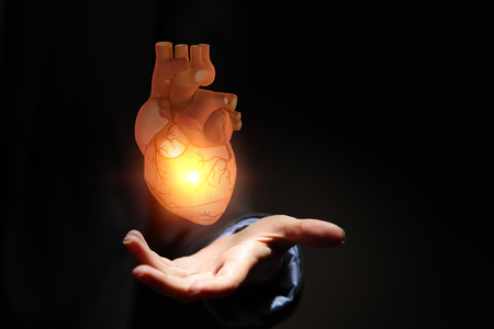 Mans hands showing anatomical heart model.. Stock Photo