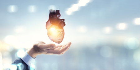 Man s hands showing anatomical heart model. Stock Photo
