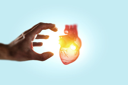 Man s hands showing anatomical heart model. Mixed media. Stock Photo - 121613980