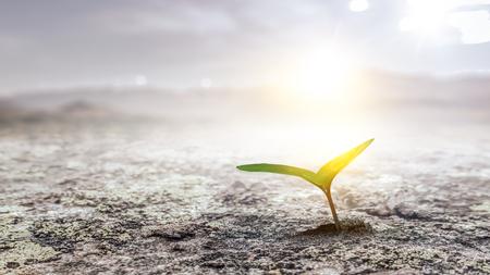 Aussaatpflanze auf dem Boden