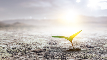 Plante de semis au sol