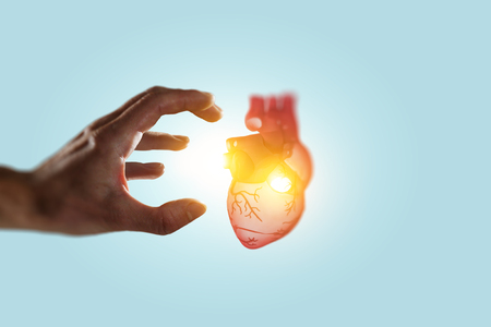 Man hands showing anatomical heart model. Mixed media. Stock Photo