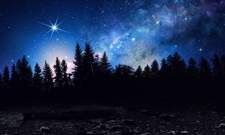 Dark firtrees against starry sky