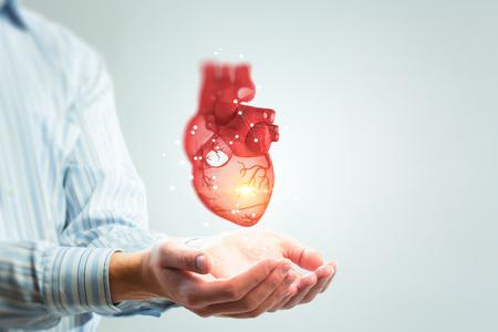 Manos del hombre que muestran el modelo de corazón anatómico. Técnica mixta.
