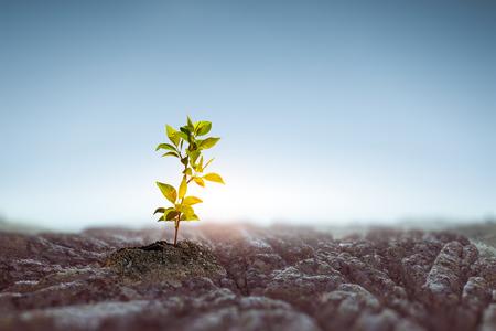 Seeding plant on stone ground Reklamní fotografie