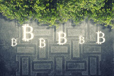 Bitcoin signs and microcircuit on grey grunge circuit board texture, green leaves