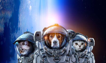 Pets in astronaut suit in the space