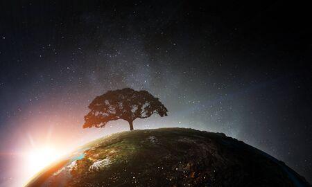 Image of tree and landscape Standard-Bild