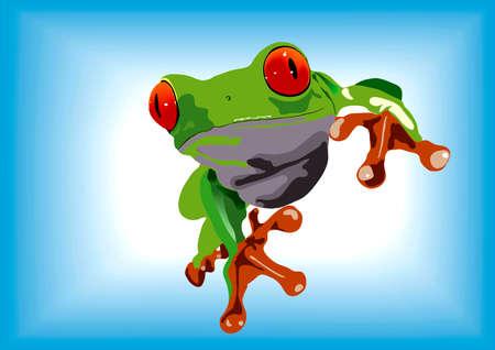 rainforest animals: Green frog Illustration