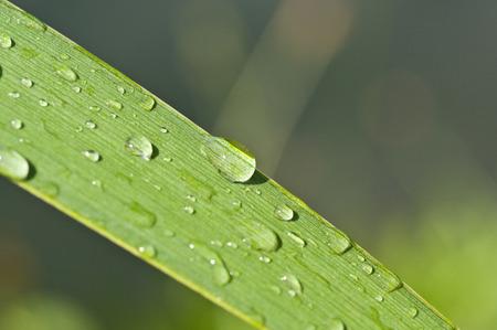 nature zen with drop water photo
