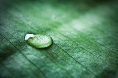 nature zen with drop water